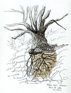 Racine d'arbre